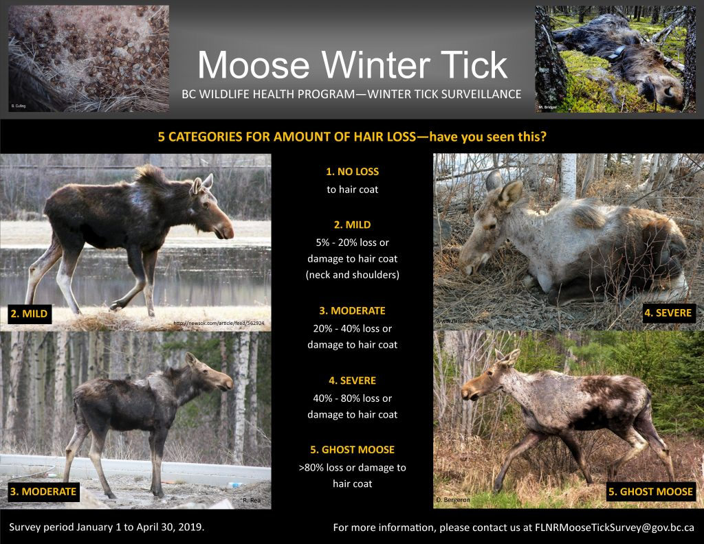 Moose Winter Tick Poster 2019
