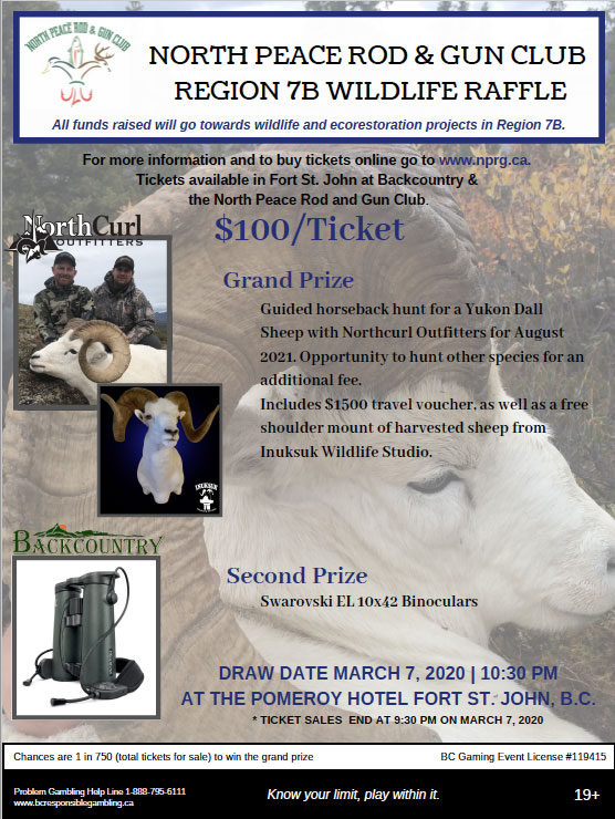 Dall's Sheep Raffle Poster
