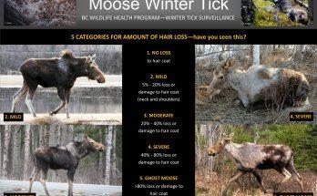Moose Tick poster